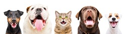 Portrait of five cute funny pets, isolated on a white background