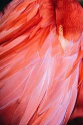 Portrait of Flamingo