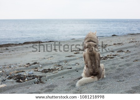 portrait of fluffy beige and...