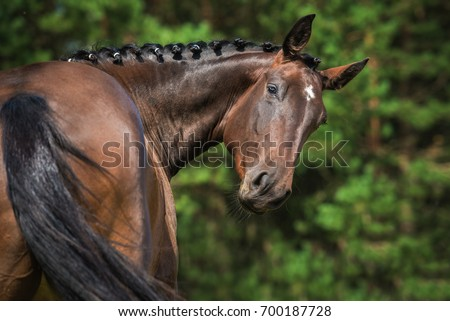 Portrait of funny bay horse looking back Foto stock ©