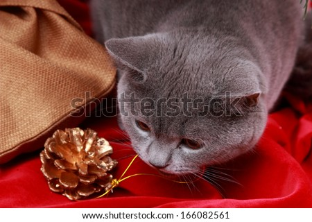 Portrait of funny cat with presents and Christmas decoration under  christmas tree on Holiday theme