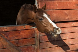 Portrait of funny smiling horse  in a wooden stable