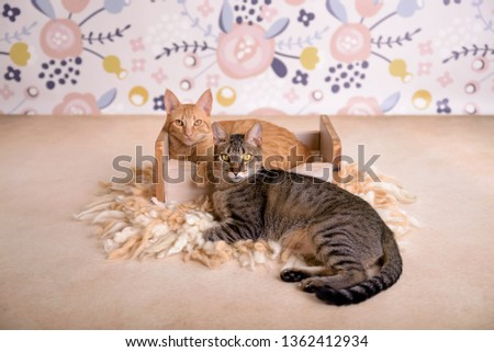 Portrait of ginger cat and tiger cat resting together #1362412934