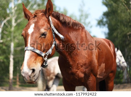 Portrait of ginger horse in farm. Outdoors