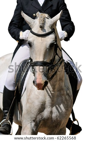 Portrait of gray dressage horse isolated on white