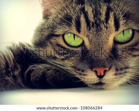 Portrait of green-eyed cat