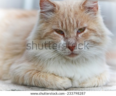 Portrait of green-eyed cat on white background.