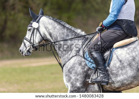 portrait of grey horse waiting start of eventing competition