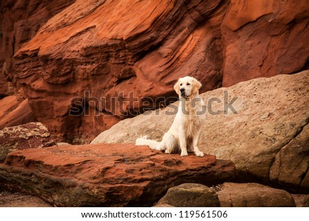 Portrait of happy dog at the red rocks of the Jurassic Coast