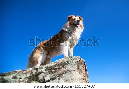 Portrait of happy dog at the rocks background of blue sky