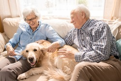 Portrait of happy senior couple with dog sitting on couch enjoying family weekend at home in retirement