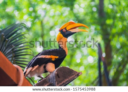 Portrait of hornbill (Bucerotidae) standing of the top of the wood in the rainforest jungle