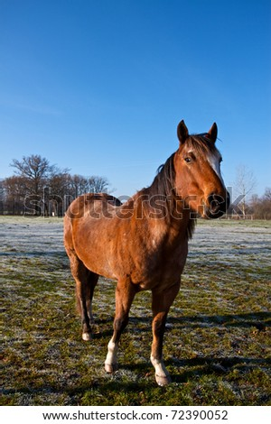 Portrait of horse during winter in France.