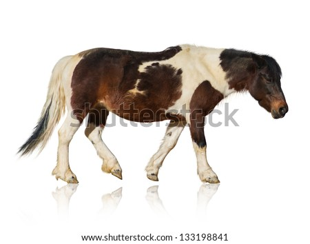 Portrait Of Horse Isolated On White Background