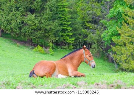 Portrait of horse on pasture