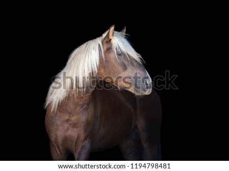 Portrait of horse on the black background #1194798481