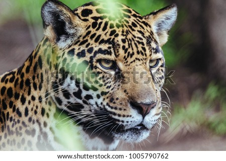 Portrait of Jaguar #1005790762