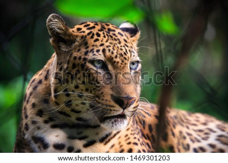 portrait of leopard closeup on forest background #1469301203