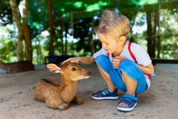 Portrait of little caucasian child feeding and petting deer fawn at outdoor park background.