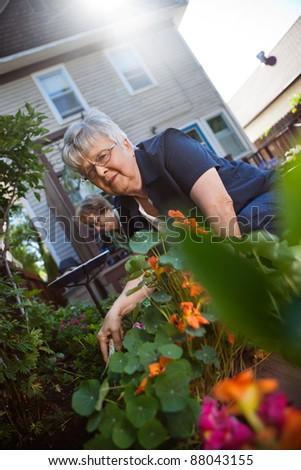 Portrait of lovely senior woman taking care of plants