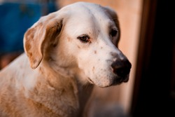 Portrait of lovely stray dog of mixed breed on the street. Concept of stray dogs, caring for pets