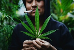 portrait of man holding cannabis leaves in his hand, A Man Smokes Cannabis Weed.
