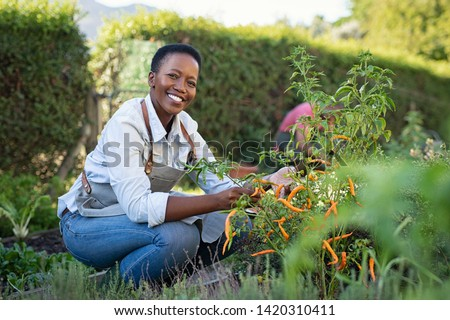 Portrait of mature woman picking vegetable from backyard garden. Black woman taking care of plants in vegetable garden while looking at camera. Proud african american farmer harvesting vegetables.