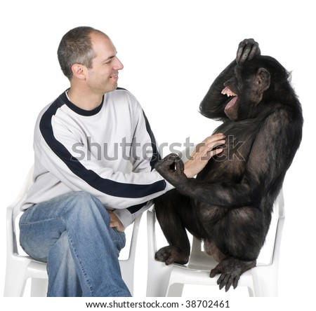 Portrait of mid adult man tickling chimpanzee against white background, studio shot. Mixed-Breed between Chimpanzee and Bonobo (20 years old) - stock photo