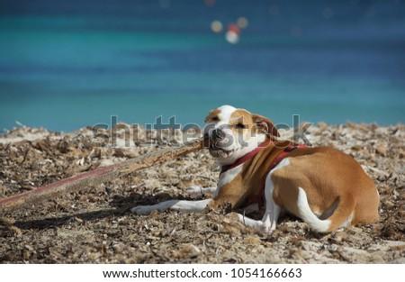 Portrait of nice playful dog #1054166663