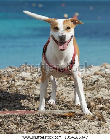 Portrait of nice playfull dog #1054165349