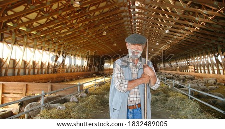 Portrait of old Caucasian handsome smiled grandfather with fork standing in stable of sheep and smiling to camera. Dolly shot. Senior male shepherd cleaning barn concept. Animals farming concept. Photo stock ©