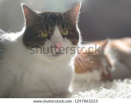 Portrait of pretty fluffy cats backlit with sun rays