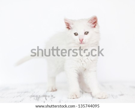 Portrait of pretty white kitten on white background