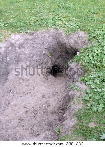 portrait of rabbit hole in ground