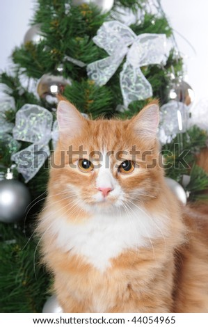 Portrait of red cat infront of Christmas tree
