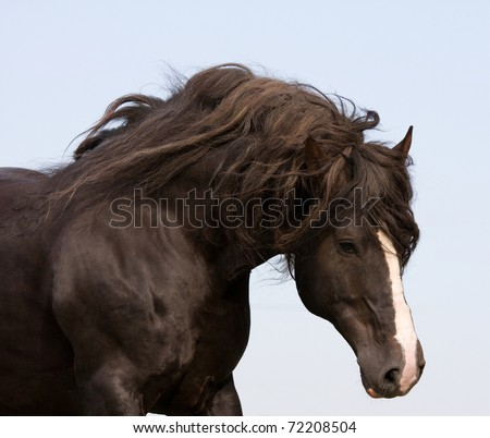 Portrait of running big beautiful horse