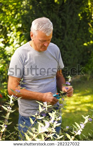 Portrait of senior man cutting plants while standing at garden at home.