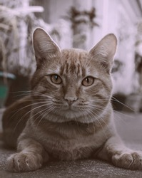 Portrait of shaggy cat on a asphalt road. Close up cat sitting or hiding with yellow eyes on concrete road.A charming cat sitting on the road is inattentive. Tabby street cat looking at the camera.