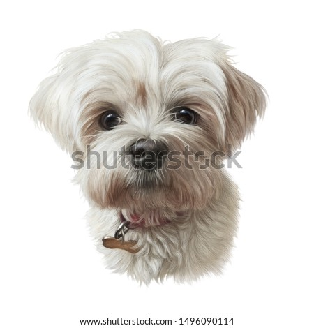 Portrait of Shih Tzu Dog. Shih-poo. Toy or Miniature Poodle isolated on white background. Cute puppy. Watercolor hand drawn pet illustration. Animal art collection Dogs. Good for print T-shirt, pillow