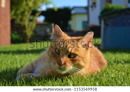 Portrait of small cute cat in the garden, sunny colorful photo, animal portrait