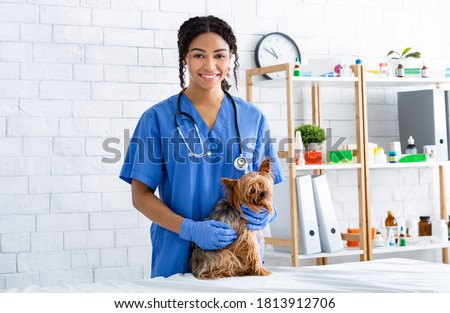 Portrait of smiling African American vet doctor with cute little dog at animal clinic Foto stock ©