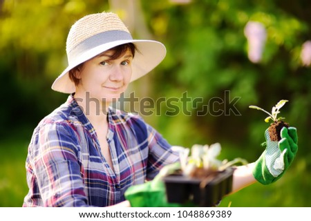 Portrait of smiling beautiful middle age/mature/older female gardener. Woman planting seedlings in bed in the domestic garden at summer day. Gardening activity