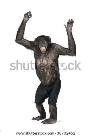 Portrait of smiling chimpanzee in shorts with arms raised against white background, studio shot. (Mixed-Breed between Chimpanzee and Bonobo) (20 years old)