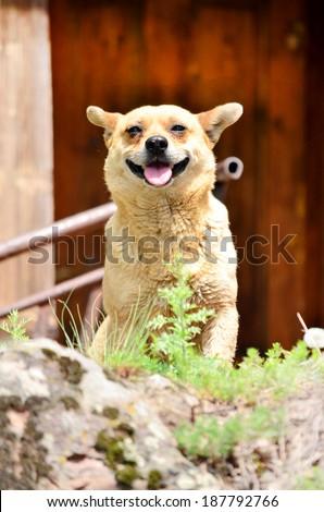 portrait of smiling dog