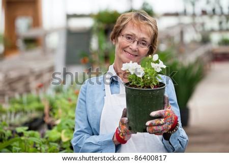 Portrait of smiling senior woman holding flower pot