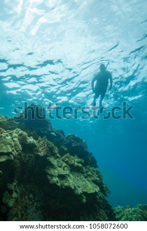 Portrait of Snorkelers Above a Huge Coral Reef #1058072600