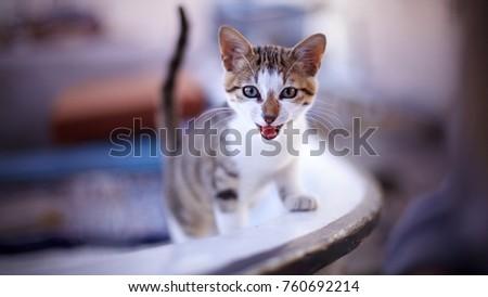Portrait of street cat. #760692214