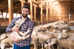 Portrait of successful farm worker rancher standing in sheep stable farmhouse and holding lamb domestic animal. In background large group of sheep livestock. Cattle breeding and food production.