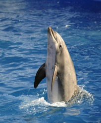 Portrait of the dolphin who has been put out from water.