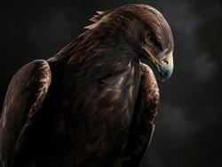 Portrait of the Golden Eagle